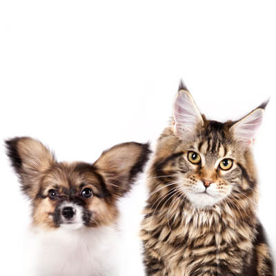 Midtown Animal Hospital - Sacramento, CA - Spaying and neutering your pet info.