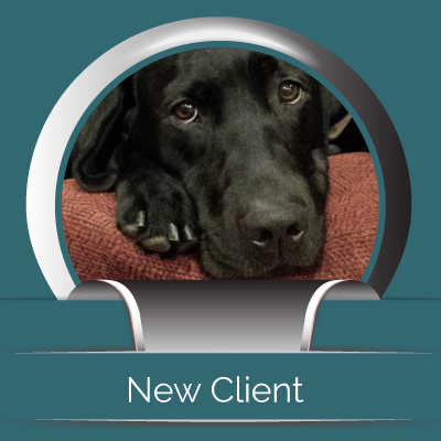 New Clients - Midtown Animal Hospital - Sacramento, CA