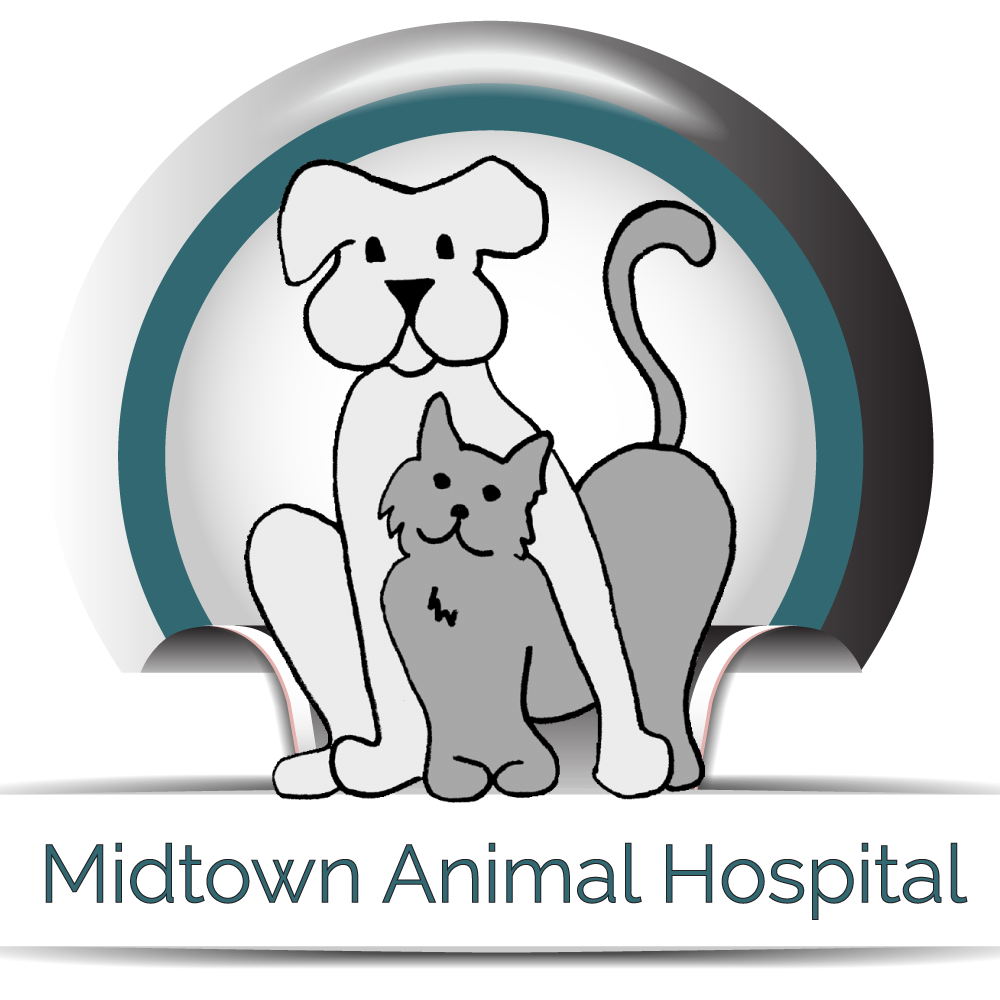 Midtown Animal Hospital in Sacramento, CA